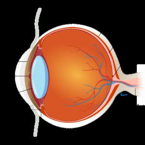 Description del ojo humano